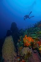 Dangleben´s Pinnacles, Soufriere Scott´s Head Marine Reserve, Dominica