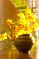 Forsythia blossoms still life in soft focus