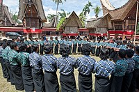 traditional funeral ceremony in Tana toraja, sulawesi,indonesia