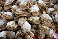 Fresh clams at the fish market of Villa MAria del Triunfo, Lima peru, the biggest in South America