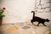europe, greece, dodecanese, patmos island, chora, cat
