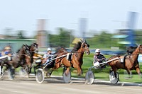 Trotting race, harness racing track, Baden, Lower Austria, Austria, Europe