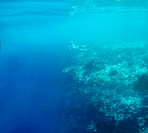 Adventurous woman snorkeling underwater along the edge of a reef _ copyspace