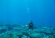 Young woman in scuba gear diving underwater above a coral reef _ copyspace