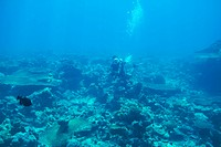 Woman in scuba gear diving above a coral reef _ copyspace