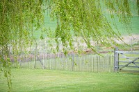 Tree with fence in a field (thumbnail)