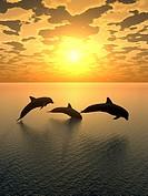 dolphin yellow sunset_2
