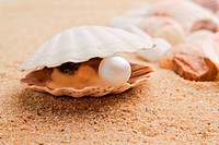 pearl on the seashell . The exotic sea shell . tre