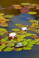 Lily Pond At Shore Acres State Park, Coos Bay Oregon United States Of America