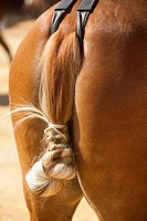 Traditional Horse Tail Know In Spanish Feria, Tarifa Cadiz Andalucia Spain