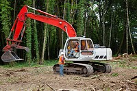 Heavy equipment operators with a backhoe in the forest, portland oregon united states of america