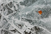 Natural Ice Surface Texture with Fall Leaf