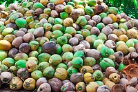 Pile of green coconuts on the ground