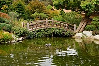 A small pond and a decorative wooden bridge