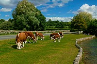 UK, Hampshire, Beaulieu, The New Forest National Park