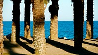Palms in Bajondillo beach, Torremolinos, Malaga Province, Costa del Sol, Andalusia, Spain