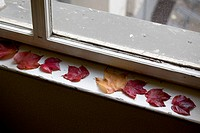 Detail of autumn leaves on a window sill