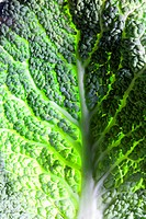 Leaf of Savoy cabbage, full frame