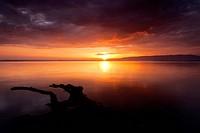 Austria, Europe, Vorarlberg, landscapes, Rheinholz, Rheindelta, Sunrise, Bodensee, Lake Constance, lake, nature, water, tree, trunk