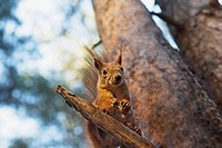 A squirrel in a tree