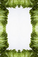 Leaves of green leaf lettuce arranged into a frame on a light box (thumbnail)