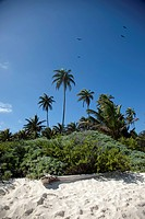 Palm trees and lush foliage on a beach in