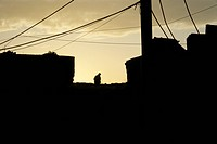 Silhouetted man on roof top