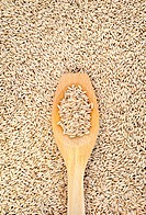 Wooden spoon and dried husked oats
