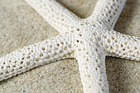 Close_up view of a starfish