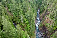 USA, Washington State, Olympic National Forest, Skokomish River