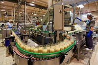 Bean bottling, Production line of canned vegetables and beans, Canning Industry, Agri-food, Logistics Center, Gutarra-Riberebro Group, Villafranca, Na...