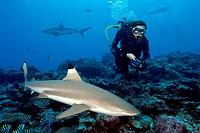 Diver and Blacktip Reefshark / Carcharhinus melanopterus