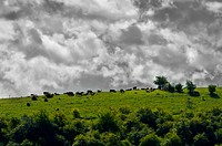 green landscape and black clouds