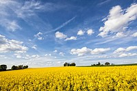 Germany, Bavaria, View of oilseed rape