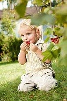 Germany, Bavaria, Boy eating red currants, portrait