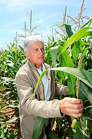 Agronomist analysing corn field