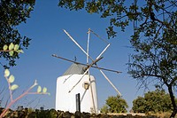 windmill on the hill