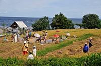 Reisfeldarbeiter