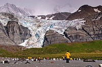 A group of tourists, seals and penguins at the base of a glacier.