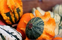 Pumpkins still_life with natural background