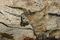 Lascaux II replica of a Lascaux cave painting. This is an auroch figure in the ´Great Hall of the Bulls´. The original Lascaux cave was closed to the ...