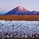 Licancabur volcano. View across a group of ice penitentes on a high_altitude plateau in the Andes mountains, Chile, towards Licancabur volcano. Penite...