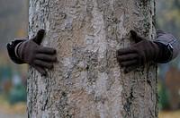 Embracing a tree
