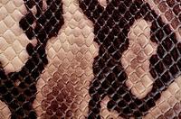 Snake skin patter