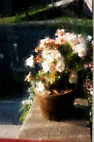 blurred image of flowers