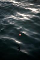 schwimmer einer angelschnur
