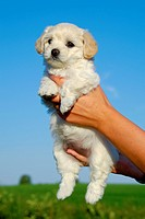 Holding sweet puppy in hands