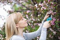 Mature woman pruning tree
