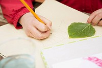 Close-up of students leaf drawing (thumbnail)