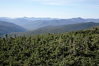 Scenic views along the Mount Eisenhower Trail during the summer months. Located in the White Mountains, New Hampshire USA.